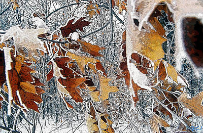 Photograph - Leaves Of Winter by Jon Lord