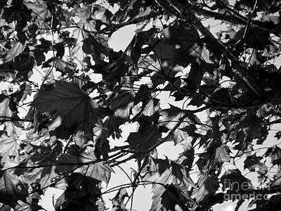 Photograph - Leaves On A Tree Ll by Laura  Wong-Rose