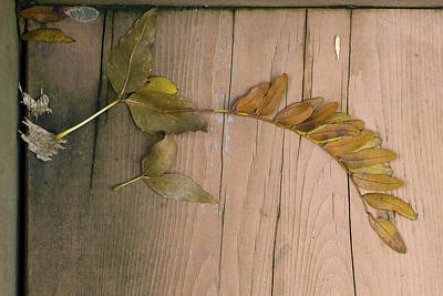 Leaves On A Wooden Step Art Print