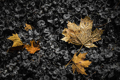 Selective Color Photograph - Leaves On Forest Floor by Tom Mc Nemar