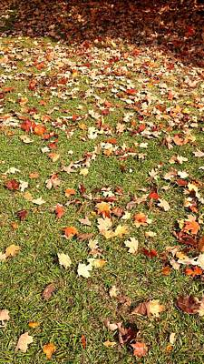 Photograph - Leaves On Grass by Kenny Glover