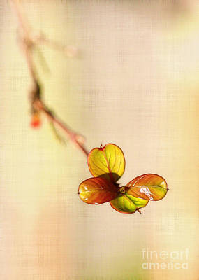 Photograph - Leaves On Linen by Judi Bagwell