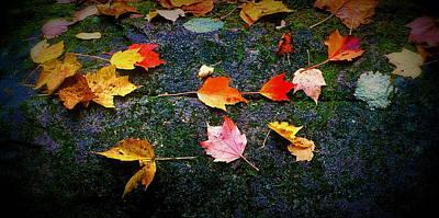 Leaves On Rock  Art Print