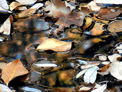 Leaves On The Waters Art Print by Chris Gudger