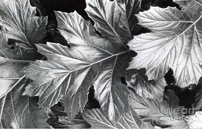 Photograph - Leaves by Patricia  Tierney