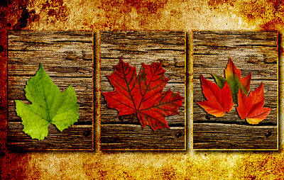 Leaves Triptych Original by Rene Larsen