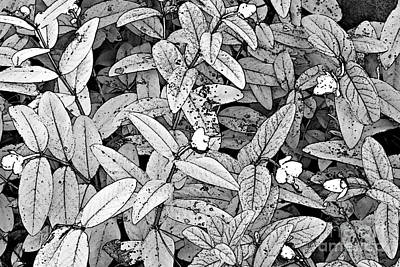 Photograph - Leaves With Small Flowers by Ethna Gillespie