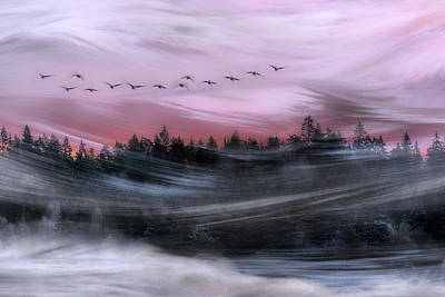 Goose Wall Art - Photograph - Leaving At Dawn by Bjorn Emanuelson