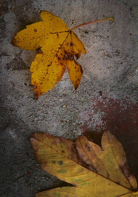 Quietly Photograph - Leaving Quietly by Odd Jeppesen