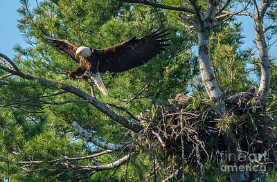 Photograph - Leaving The Nest by Cheryl Baxter