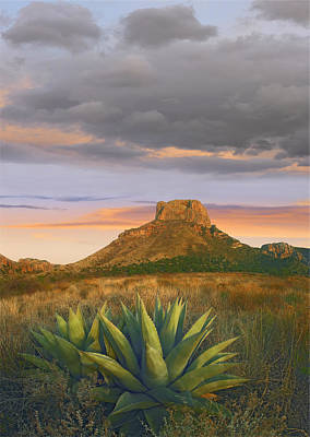 Casa Grande Photograph - Lechuguilla Agave And  Casa Grande Big by Tim Fitzharris