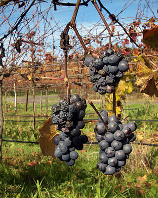 Pinot Noir Photograph - Left Behind by Kenneth Hadlock