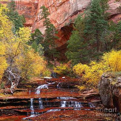 Photograph - Left Fork North Creek Zion by Bill Singleton