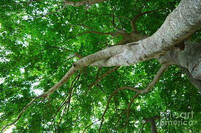 Photograph - Leg Up Tree by Nancie DeMellia