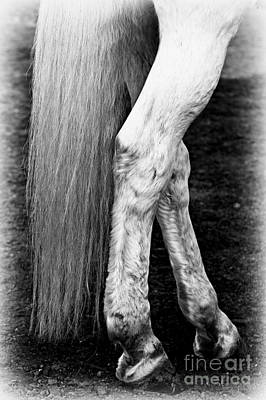 Pets Photograph - Legs by Clare Bevan
