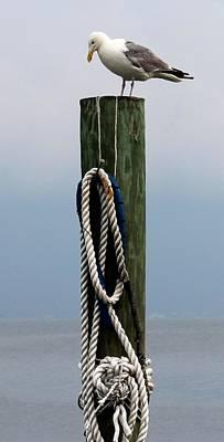 Isle Photograph - Leisurely Seagull 2 by Matthew Modena