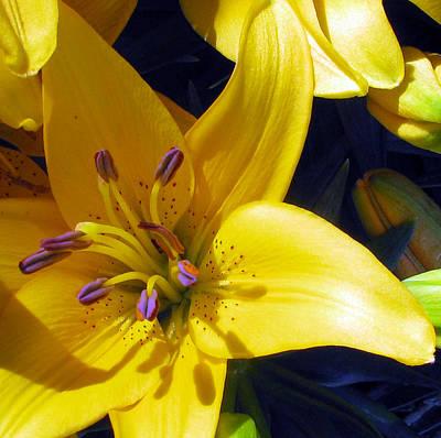 Photograph - Lemon by Debi Singer