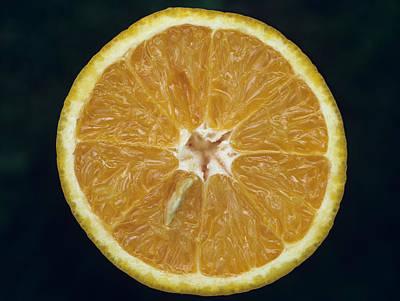 Photograph - Lemon by Dragan Kudjerski