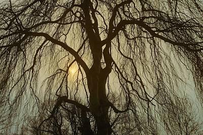 Photograph - Lemon Drop by Julie Grandfield