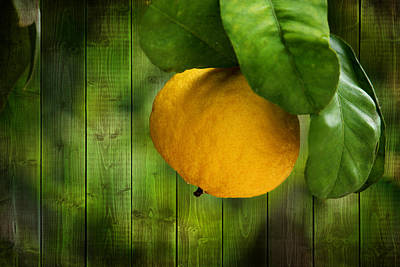 Lemon Mixed Media - Lemon by Heike Hultsch