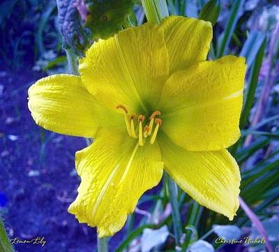Photograph - Lemon Lily by Christine Nichols