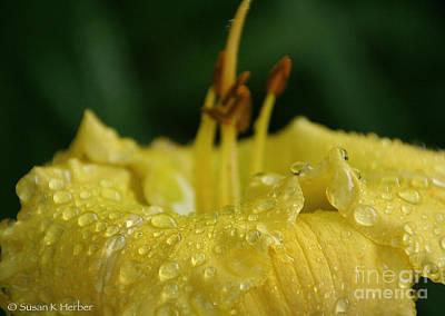 Photograph - Lemon Lily Drops by Susan Herber