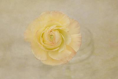 Lemon Pastels Art Print by Kim Hojnacki