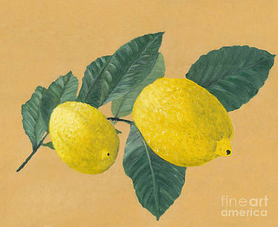 Lemon Painting - Lemon Tree Branch With Two Lemons. by Kerstin Ivarsson