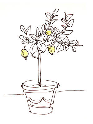 Sour Drawing - Lemon Tree by Karin Stein