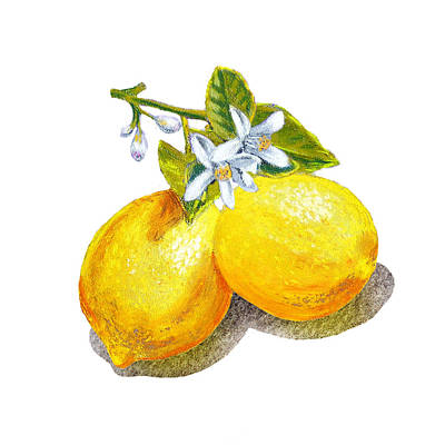 Lemon Painting - Lemons And Blossoms by Irina Sztukowski