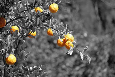 Stellenbosch Photograph - Lemons by Chris Whittle