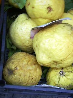 Photograph - Lemons Of Sorento by Esther Newman-Cohen
