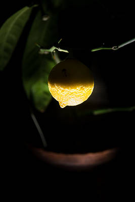 Photograph - Lemon's Planet by Michael Goyberg