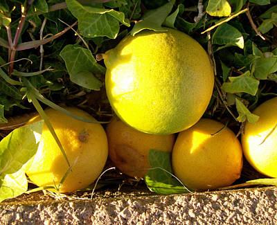 Photograph - Lemons by Shan Ungar