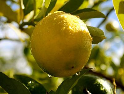 Photograph - Lemony Drops by Amanda Holmes Tzafrir