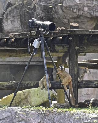 Photograph - Lemurs by Carol  Bradley