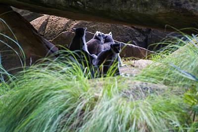Photograph - Lemurs In A Rock Den by Chris Flees