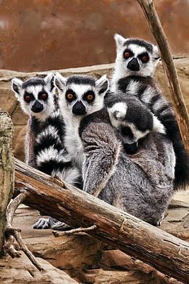 Lemurs It Is A Family Affair Print by Marcia Colelli