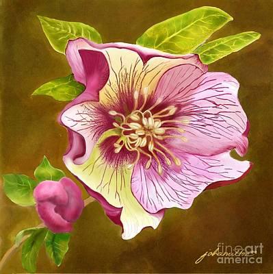 Lenten Rose Art Print by Joan A Hamilton