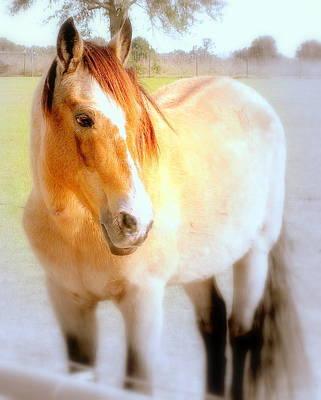 Paso Fino Stallion Photograph - Leo De Vez by JoeEd Casillas