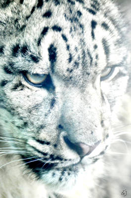 Photograph - Leo Up Close by Emily Stauring