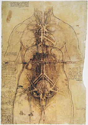 Photograph - Leonardo: Anatomy, C1510 by Granger