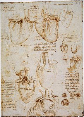1512 Photograph - Leonardo: Anatomy, C1512 by Granger