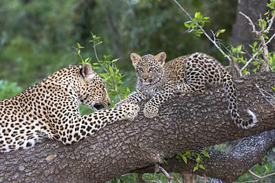 Felidae Photograph - Leopard And Cub Masai Mara Kenya by Andrew Schoeman