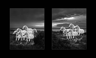 Horse Head Digital Art - Leopard Appaloosa  by Betsy Knapp