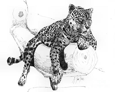 Drawing - Leopard At Rest  by Audrey Van Tassell