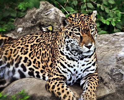 Leopard At Rest Print by Marty Koch