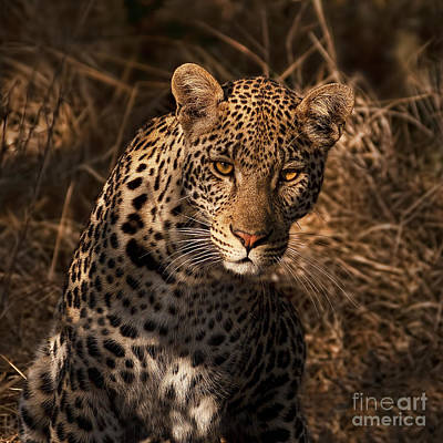 Photograph - Leopard by Barbara Youngleson