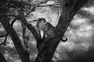 Leopard Wall Art - Photograph - Leopard by Bjorn Persson