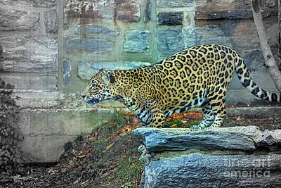 Photograph - Leopard Charge by Marcia Lee Jones